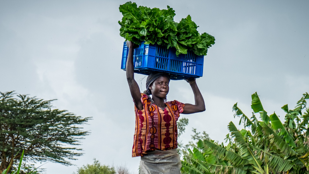 Opportunities to Promote Gender Equity in Smallholder Farming