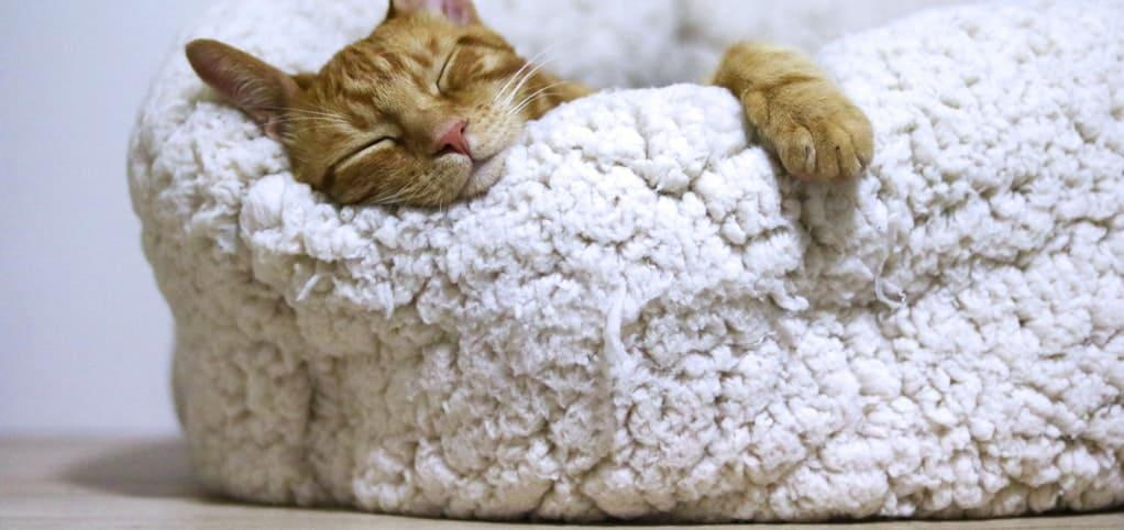 warm home cat