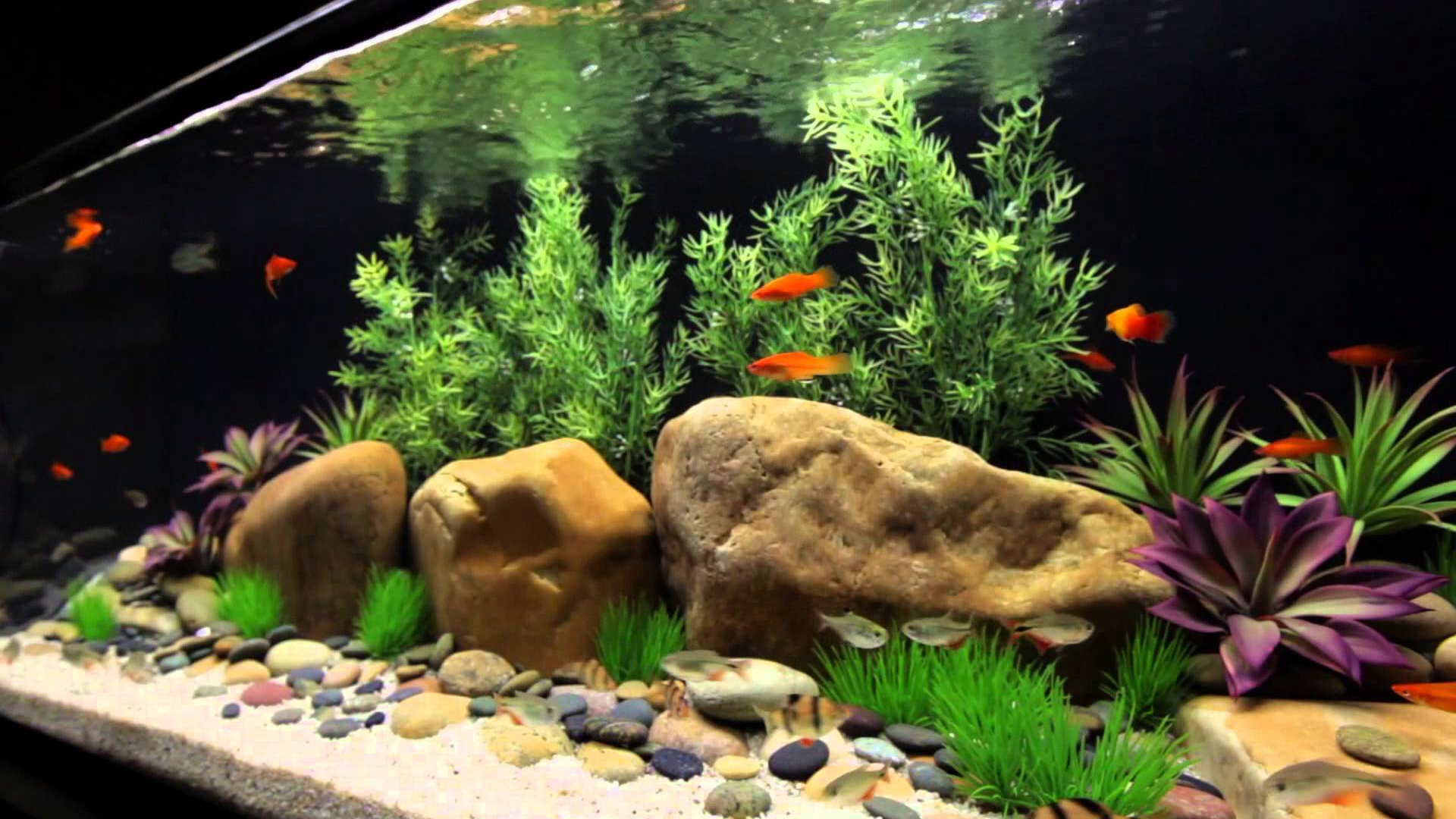 The ultimate freshwater aquarium check list