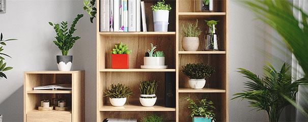 Regal aus Holz als Ablage für Pflanzen