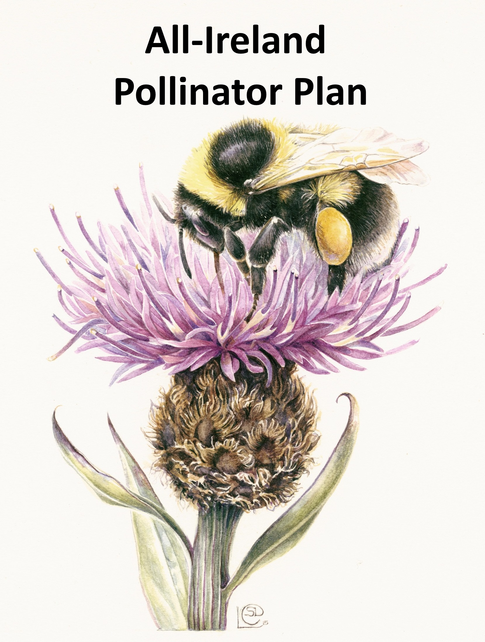 Pollinator Friendly Councils