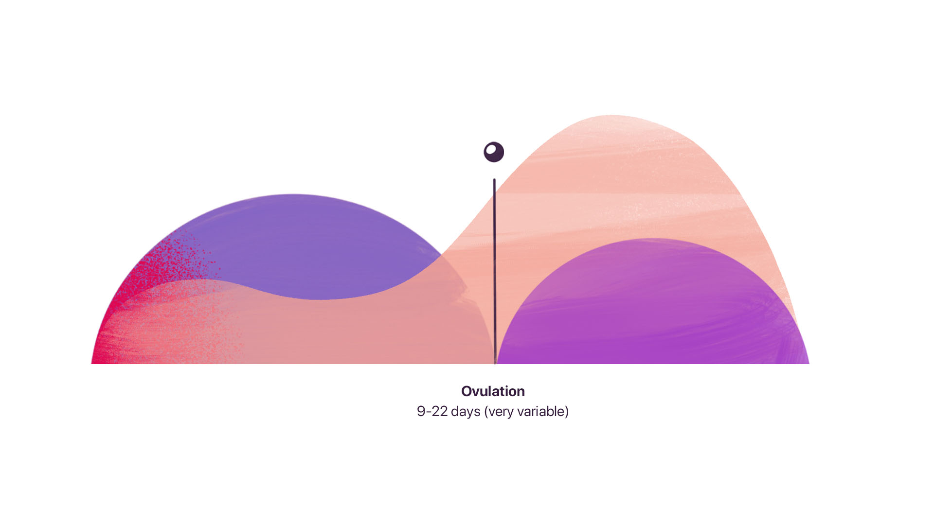 ovulation in the menstrual cycle