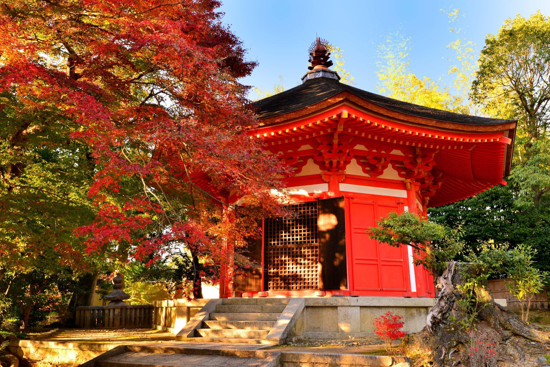 Highlights of Japan & China | EF Ultimate Break