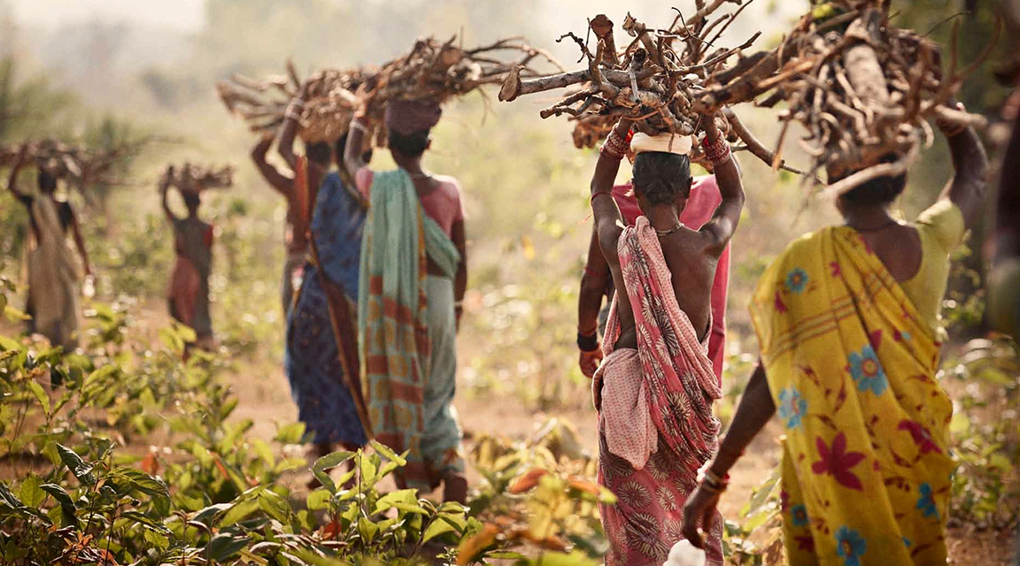 Women transport wood back to their homes