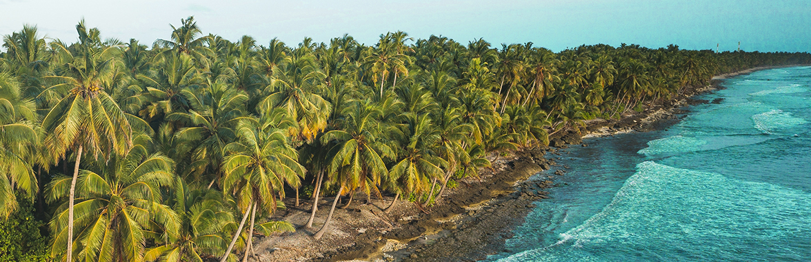 Palm-tree lined shore
