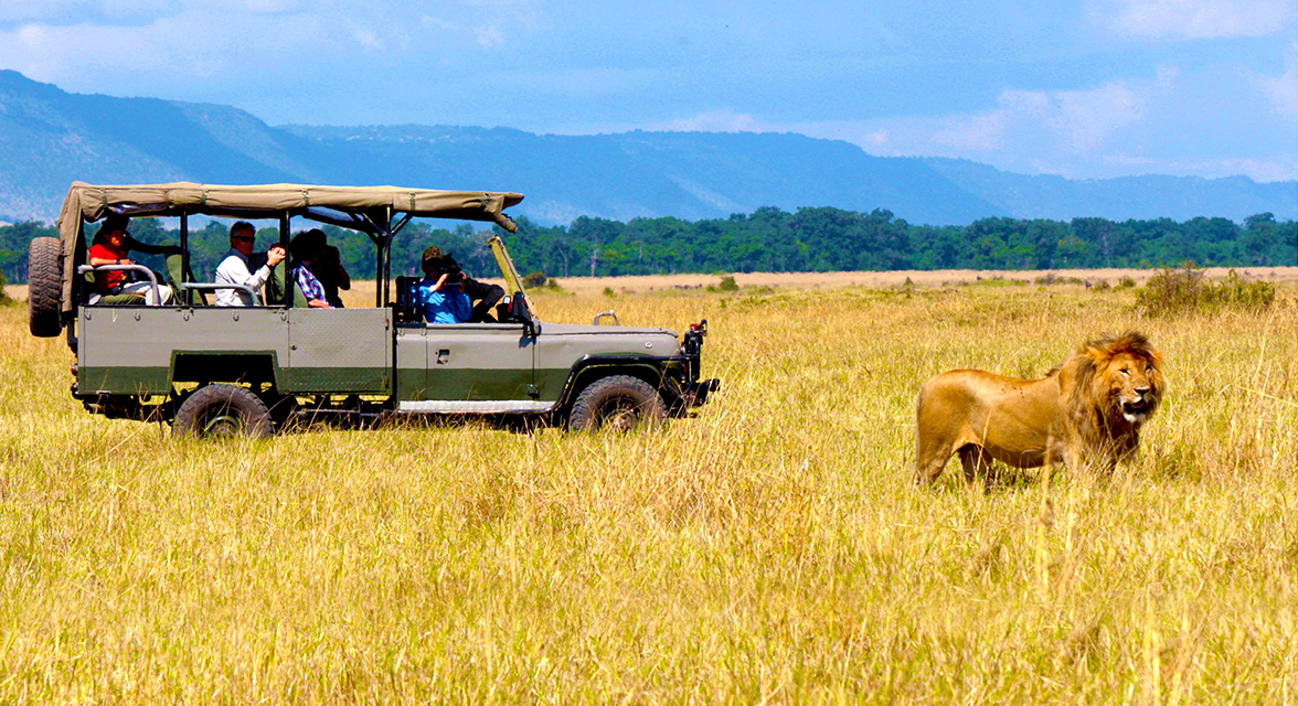 Travellers in the savanna on safari watching lion