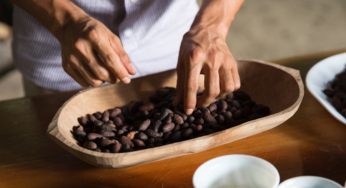 Local examining cacao beans in Ecuador