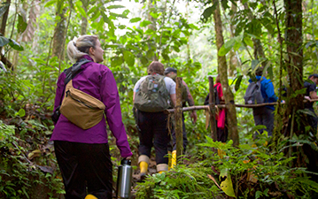 Travelers explore the forest along the Amazon.