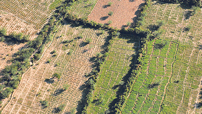 An aerial view of farming plots