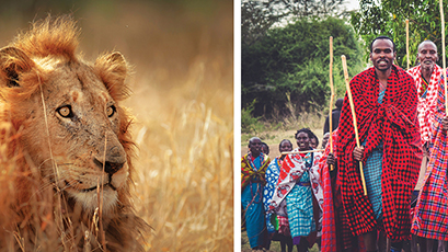Left: a lion. Right: Maasai Warriors.