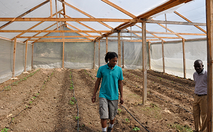A farmer inspects a new greenhouse