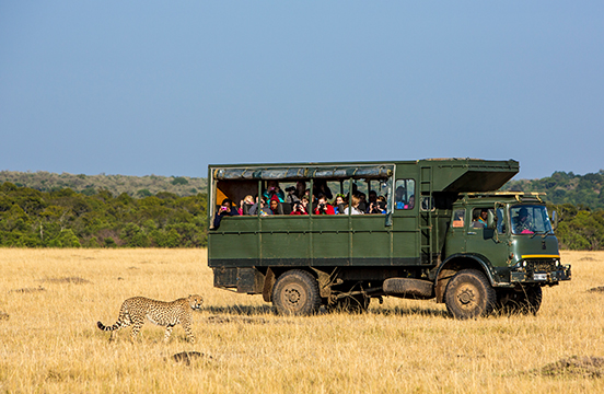 Travellers on wildlife safari watching a leopard