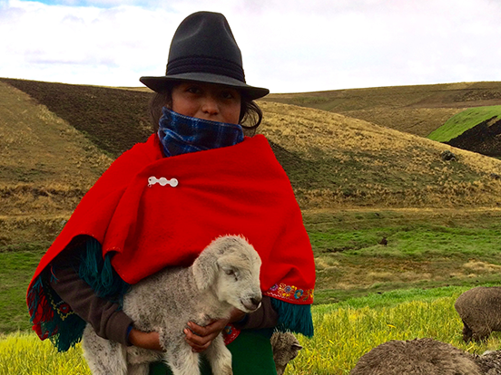 Local girl in traditional clothing holding a sheep outside against the grassy hills of Ecuador