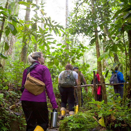 Travellers trekking through Amazon Rainforest
