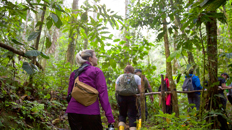 Travellers trekking through the rainforest