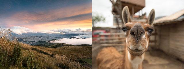 collage of mountain and llama in quito ecuador