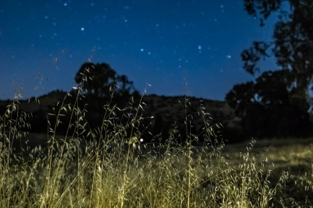 green grass in field at night