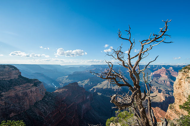 tree branches in front of cayons in grand canyon national park