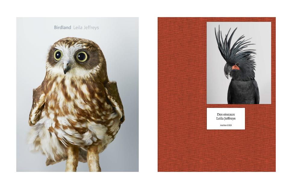 Birdland and Des Oiseaux by Leila Jeffreys