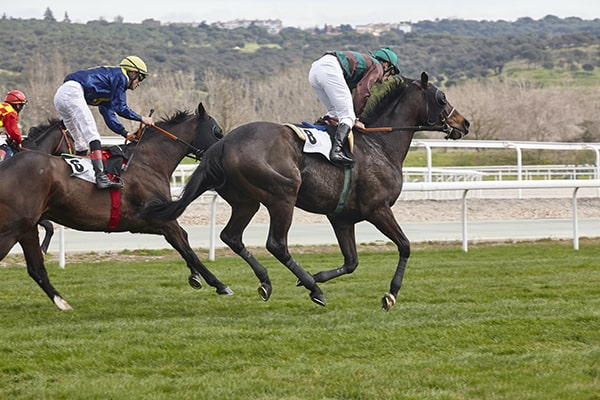 What horse to bet on preakness bears vs cowboys betting predictions for english premier