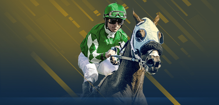 Tvg horse race betting opencl download bitcoins