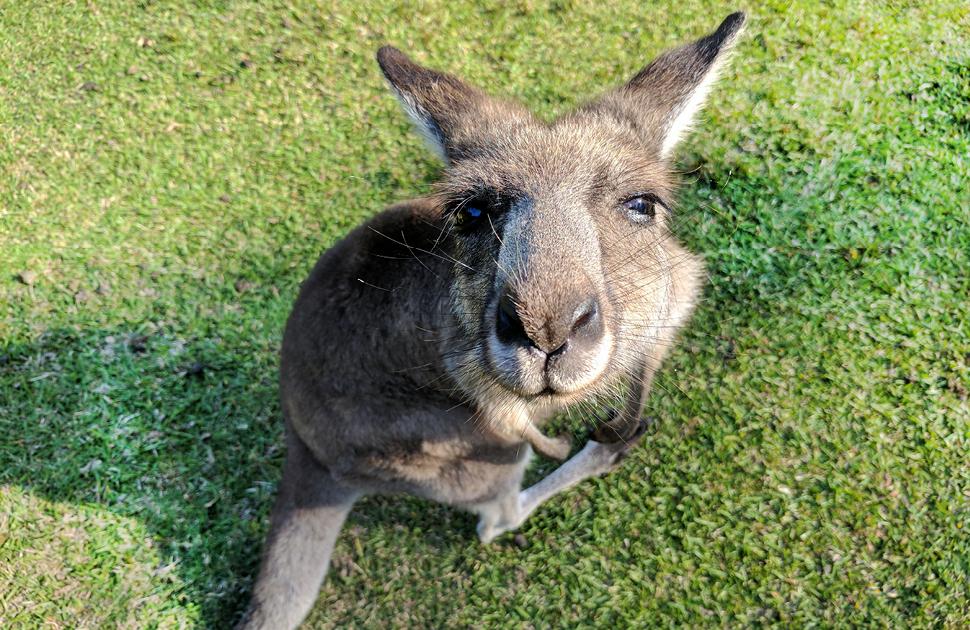 Virtual Zoo Tours