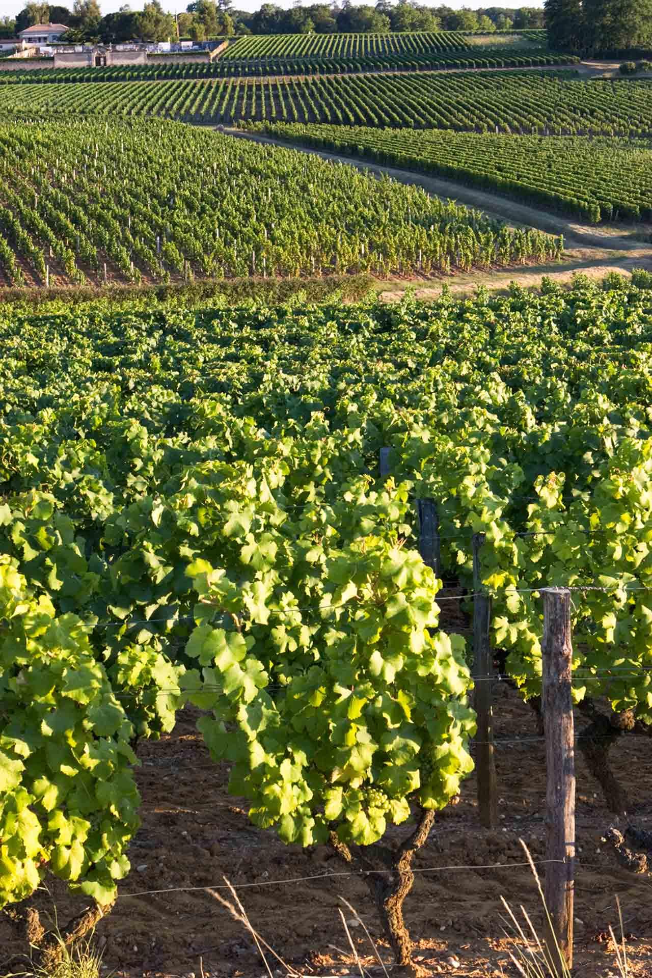 Les vignobles bordelais