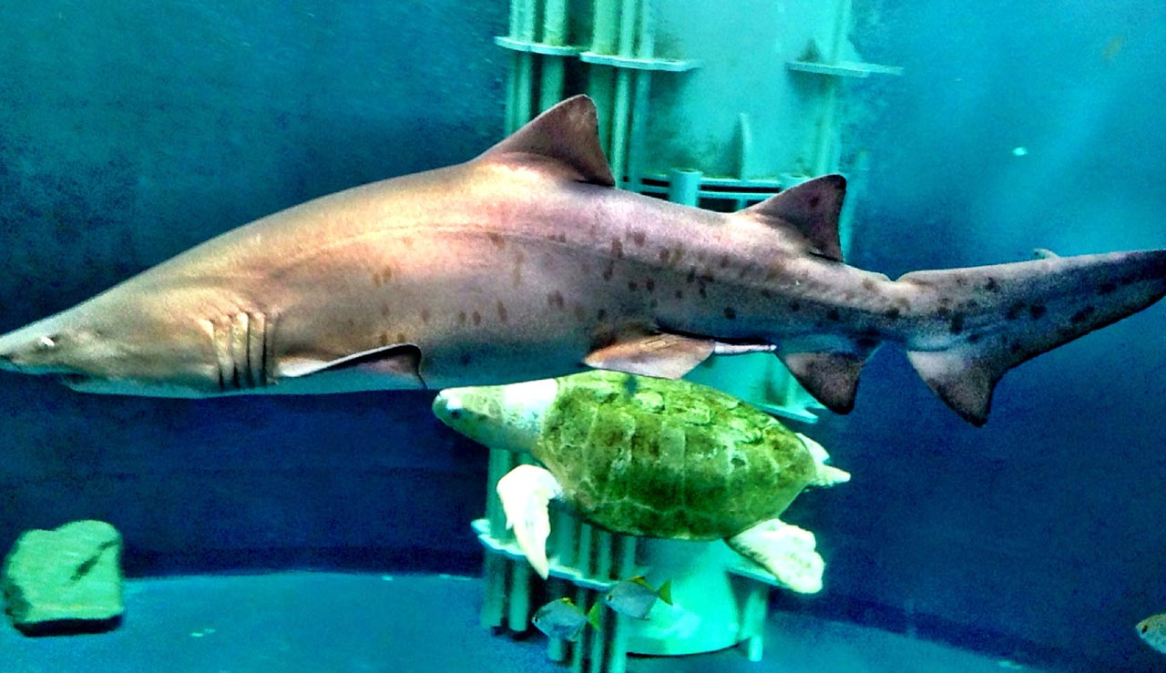 Grand aquarium de St Malo