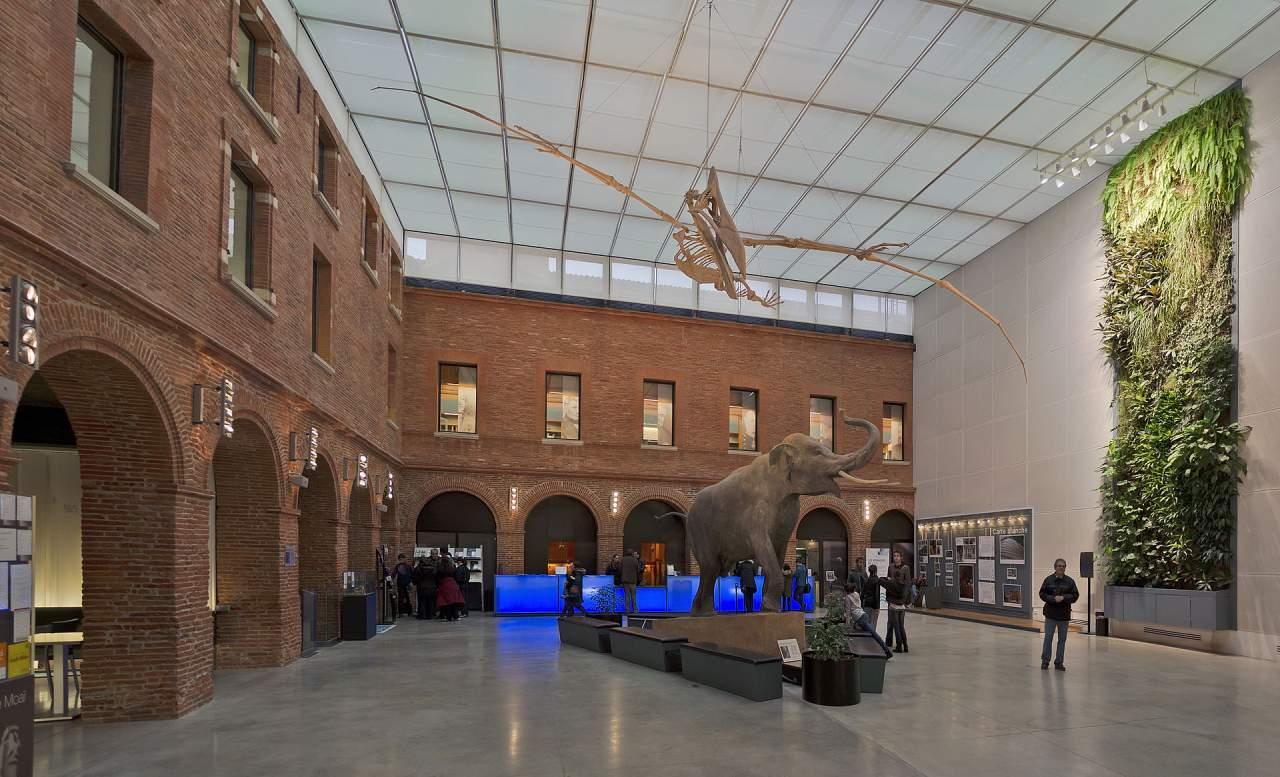 Le Museum d'histoire naturelle de Toulouse