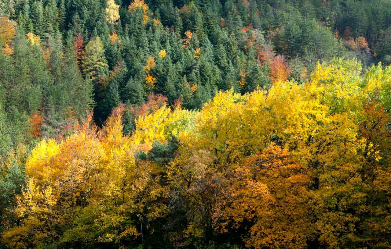 La forêt de Boscodon, Provence-Alpes-Côte d'Azur