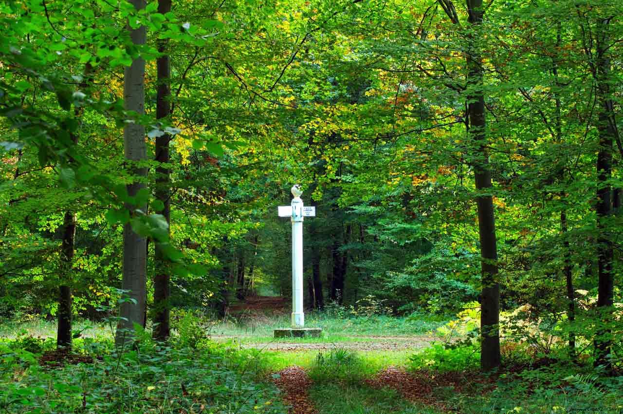 La forêt de Compiègne, Hauts-de-France