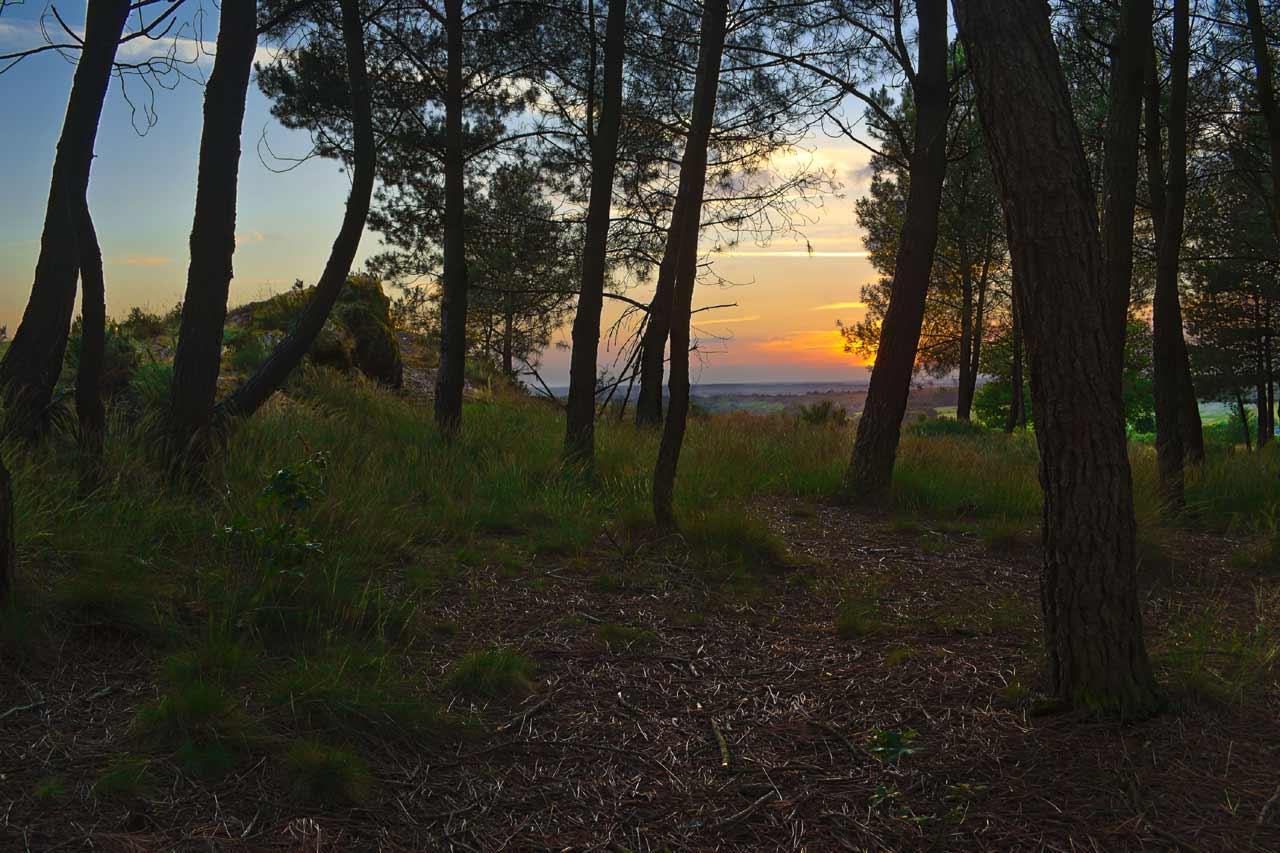 La forêt de Brocéliande, Bretagne