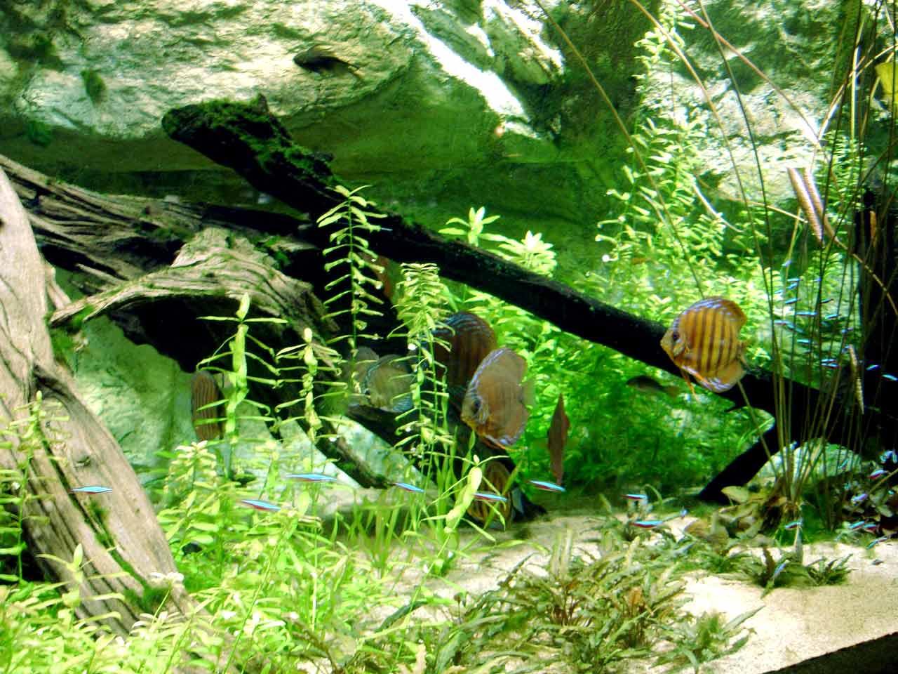 Aquarium tropical du palais de la Porte Dorée, Paris