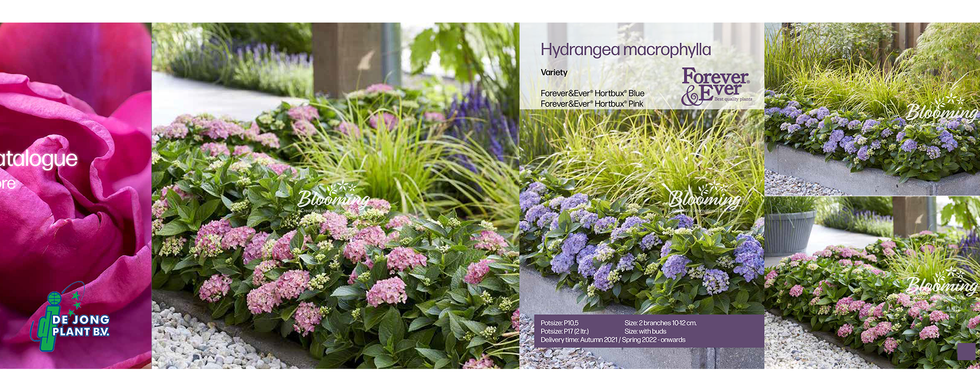 Catalogue, brochure, print, plant images photo
