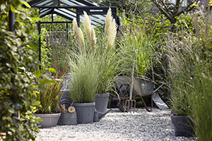 Ornamental grasses collection, cortaderia, imperata, miscanthus, perennial, autumn, on pots, botanical stock photography, images