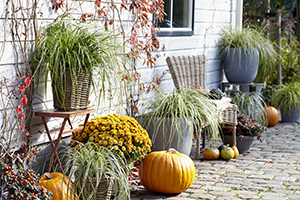 Carex collection, pumpkins, perennial, ornamental grasses, autumn, lifestyle, botanical stock photography, image library
