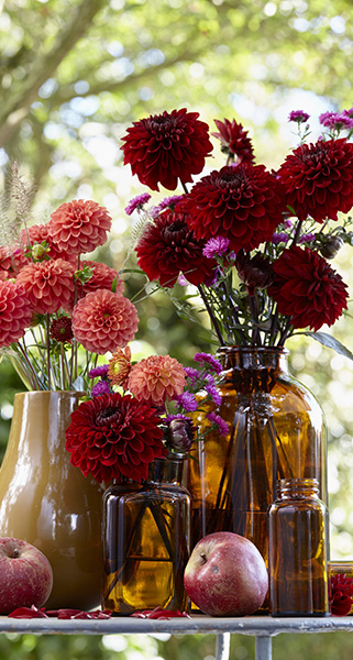 Autumn bouquet, dahlia, dahlias, vases, cut flowers, botanical picture agency