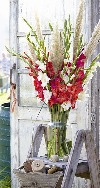 Gladiolus bouquet, sword lilies, vase, outdoor lifestyle photography, botanical, cut flowers