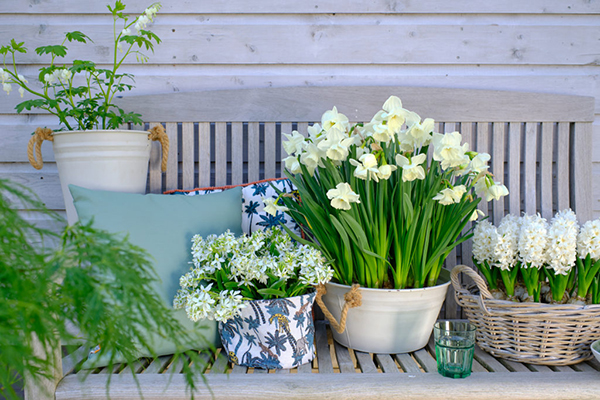 Pots with spring flowering bulbs, daffodils, hyacinths, botanical website, image library