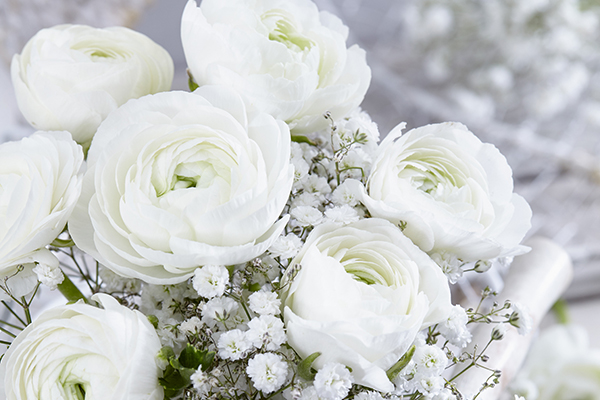 White Ranunculus flowers in bouquet, botanical image library