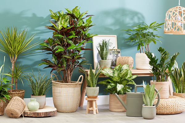 Indoor plants, house plants, urban jungle, on pots, green decor, botanical images