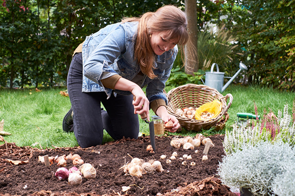 Planting spring flowering bulbs, gardening, autumn, lifestyle images, botanical photography