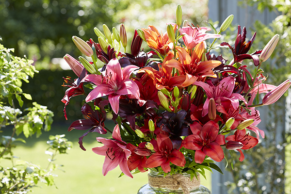 Mixed lilium bouquet, lilies, mixed flowers on vase, outdoors, botanical photography