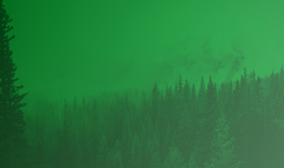 forestation Thumbnail