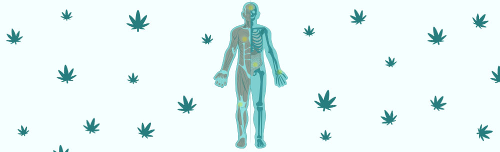 cover image for article The Endocannabinoid System