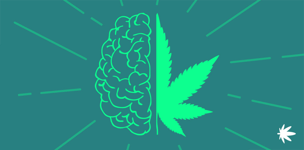 how CBD affects the human body
