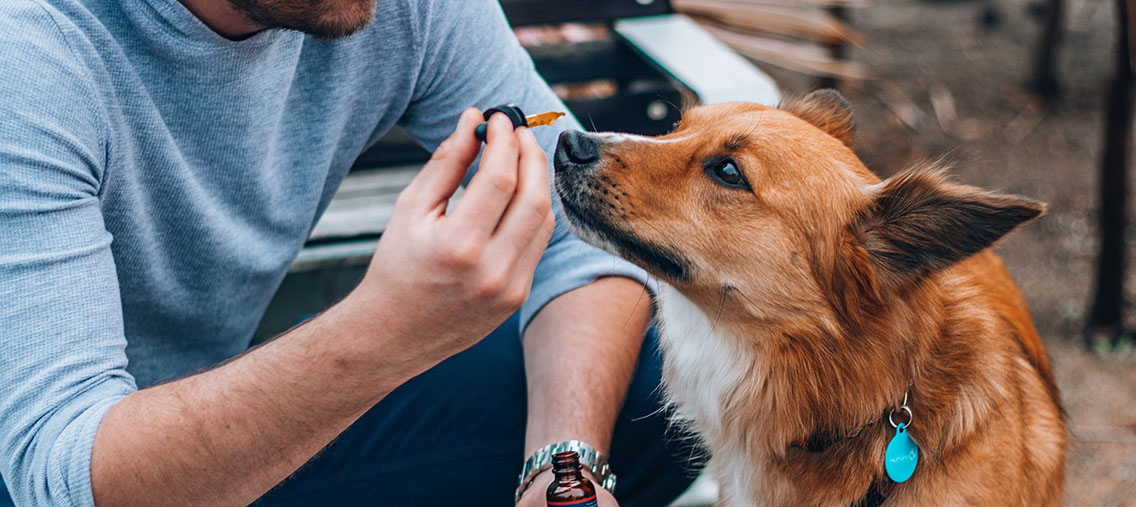 article image for CBD oil for dogs: Guide for Australian pet owners