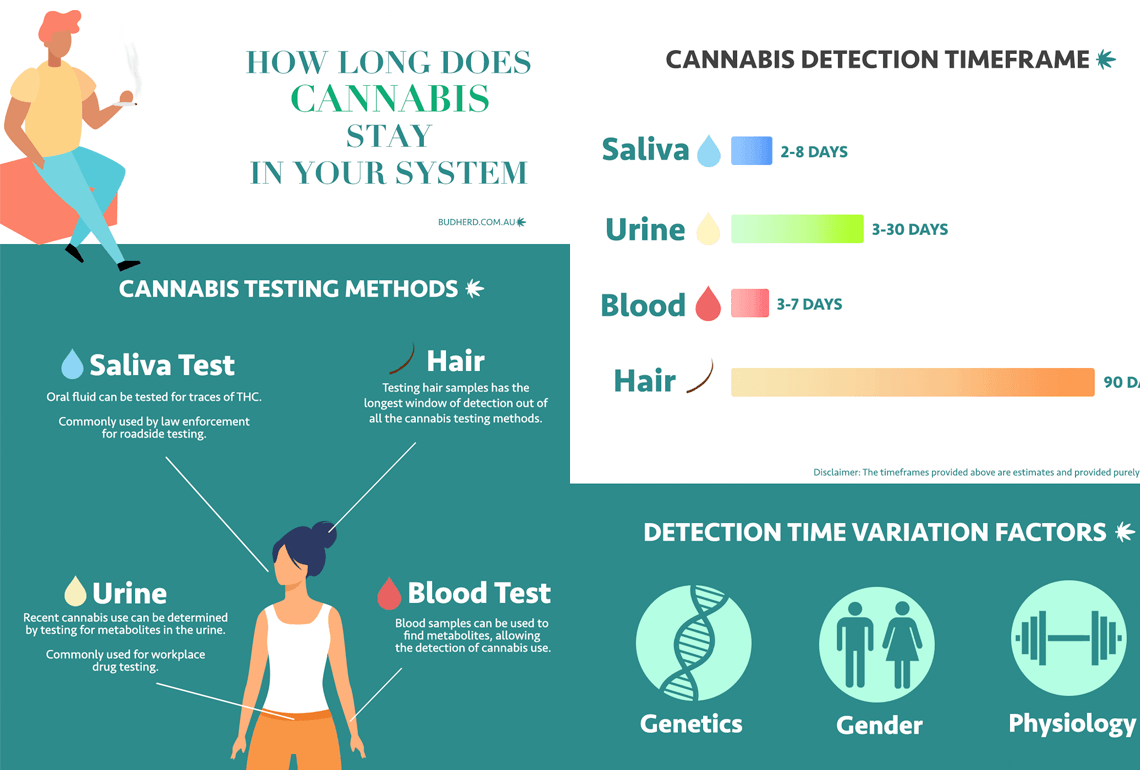 article image for How long does marijuana stay in your system?