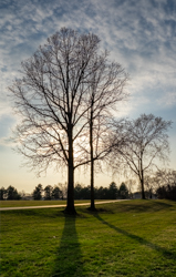 Trees in the late evening