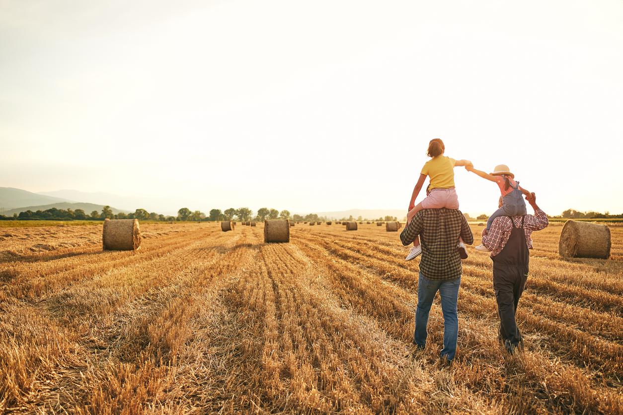 Bauernhöfe Preisentwicklung